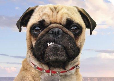 PetSmart Pup Ballgame Featured